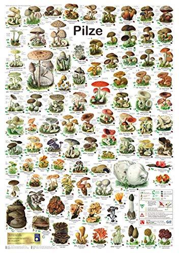 Geschenk für Pilzsammler